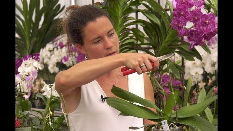 Comment entretenir une orchidée