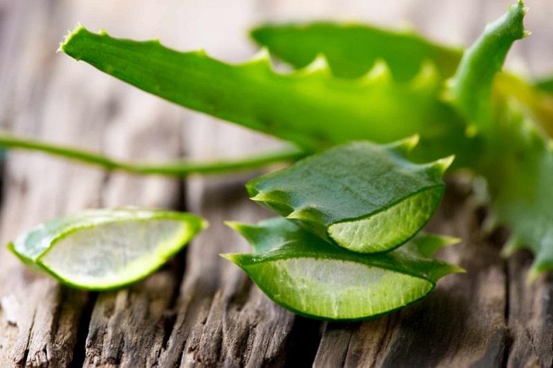 Où acheter des feuilles d'aloe vera